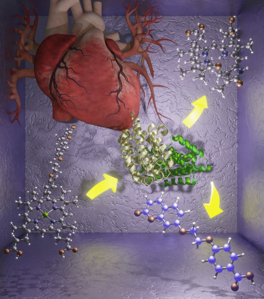 Illustration of a heart with molecules